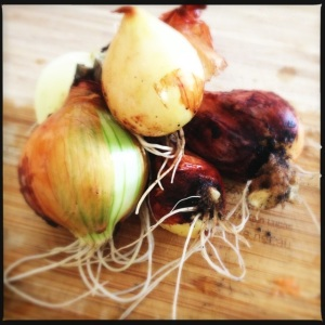 Homegrown onions